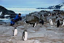 南極の孤島より